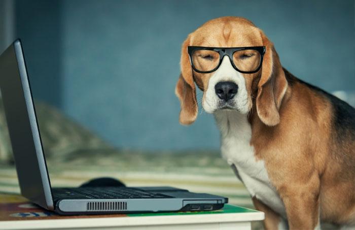 pies zdaje egzamin na komputetrze